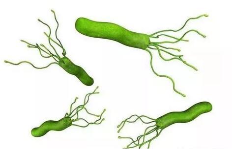 幽门螺杆菌会传染吗?幽门螺杆菌传染性怎么样?