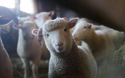 羊奶品牌正在加速破圈 ,蓓康僖已率先打响这场品牌破圈之战