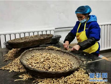 甘肃将多举措促进中药材产业提质增效 ,打造出一个100亿元以上省级中药材现代农业产业园