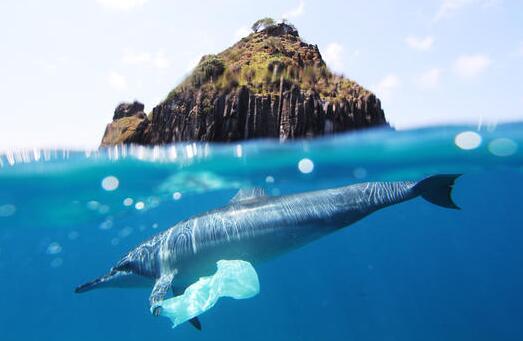 日本核废水排入大海后,对中国有何影响?还能吃海鲜吗