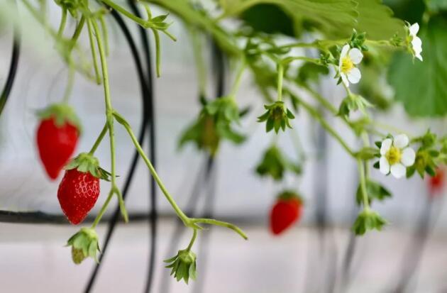 """分析中国农业推进AI农业发展,迈向农业""""数字生产""""高地的道路"""