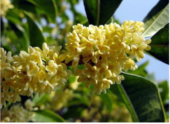 300种常见园林植物开花月份表一览(建议收藏)
