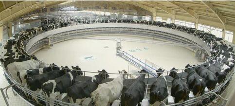 吹响新时代奶业优质发展的号角, 科技引领国产奶业走上优质乳之路