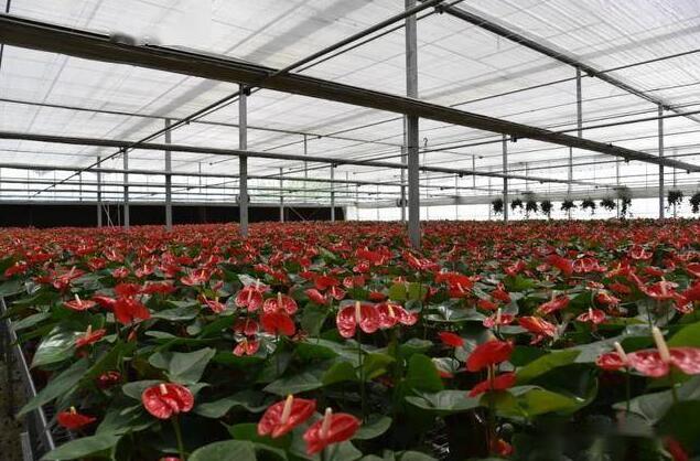 2021年国内盆栽植物产业产销形势分析(值得了解)