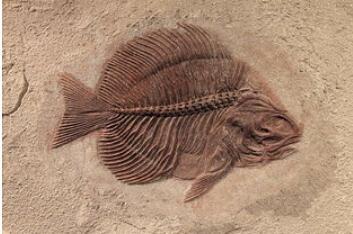 化石是怎样形成的?化石的形成过程是怎样的?