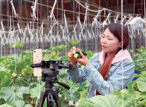 数字农业给北京市密云、四川理塘带来的看得见的变化