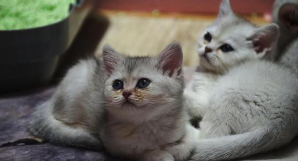 """痛心!活体动物被施行盲盒经济线上销售,市场""""扭曲""""下谁来保障小动物的生命?"""
