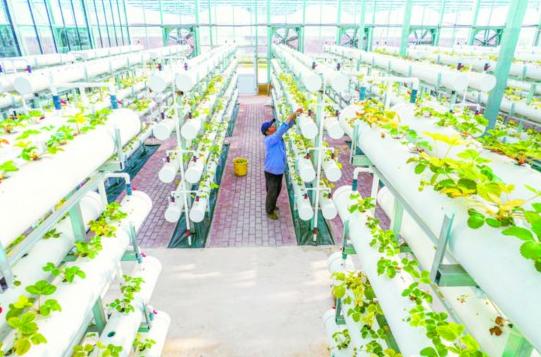 """合肥着力推进智慧农业建设,为农业注入""""创新因子"""""""