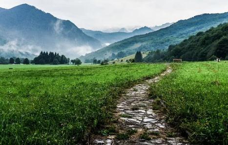 """科学绿化:同步提升国土绿化的""""含绿量""""和""""含金量"""""""