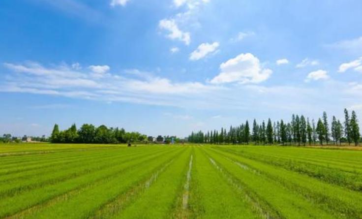 农业全产业链建设成为重塑农业竞争力的关键之举