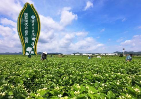 农业全产业链建设的意义:重塑农业竞争力,加快农业现代化步伐