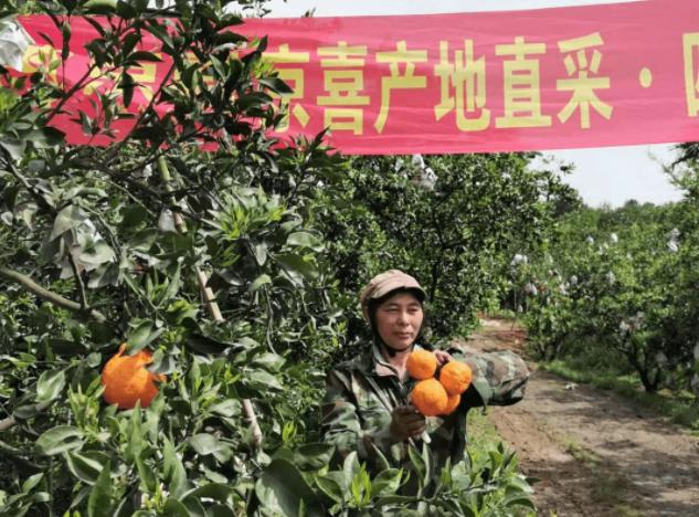 """数字农业助力柑橘销量增长,筑起眉山""""乡村振兴梦"""""""