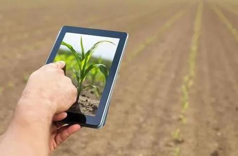 """数字技术赋能传统农业,乡村治理有了""""智慧动图"""""""