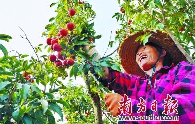 广东农业农村经济发展良好,特色产业富民增收