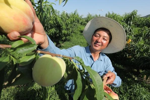 高质量农产品上行:推动消费升级、农业现代化正向循环
