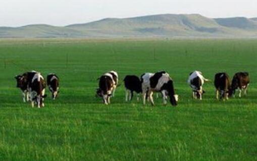 营收利润三年增、原奶需求上涨,优然牧业上市潜力足
