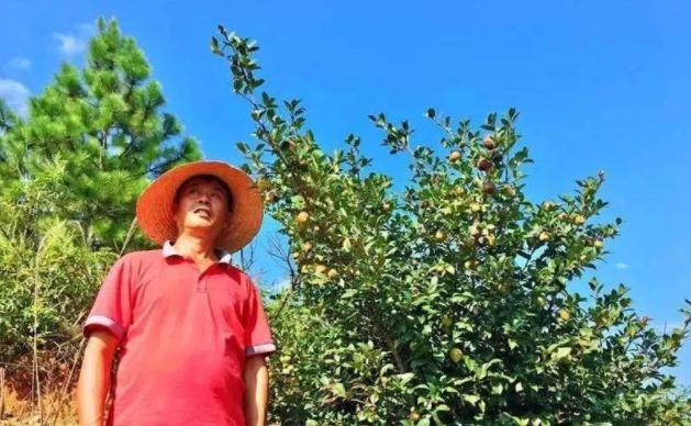 浅析中国油茶产业面临的主要问题及实现油茶产业的突围方法