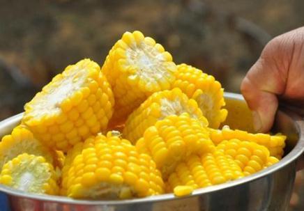 玉米新品种'脆甜89':荣获2021年十大甜玉米金奖第一名