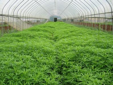 大棚蔬菜种植利润有多少,大棚蔬菜种植一亩地的投入成本预算