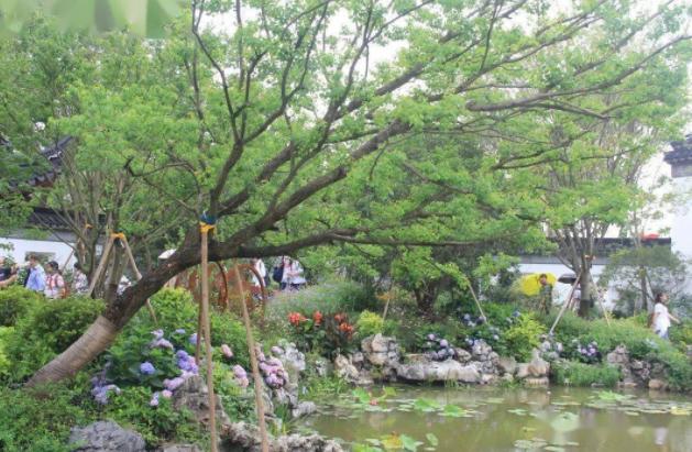 """基建綠化成為園林綠化行業""""捕魚""""的新風口"""