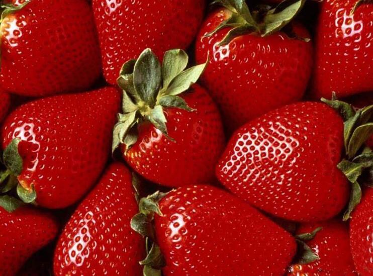 垂直農場草莓走紅,什么是垂直農場更在乎的作物品種