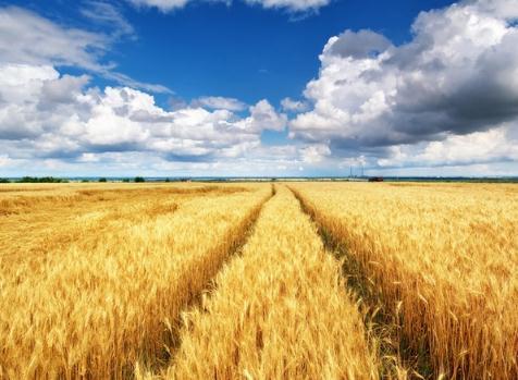 2021年全國夏糧總產量14582萬噸,比2020年增加258.9萬噸