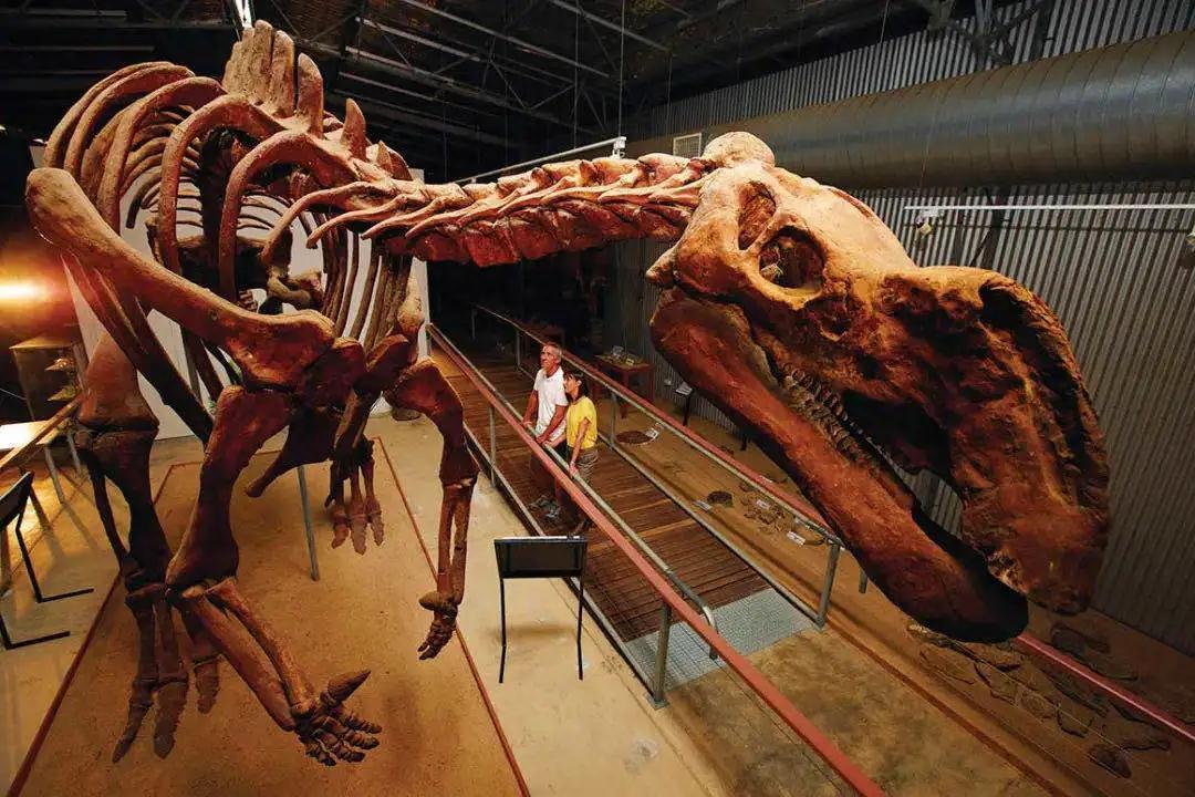 南方泰坦巨龙:澳大利亚史上最大恐龙,全球15种体型最大的恐龙之一