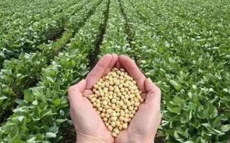 国产大豆种业之困,育种技术落后、投入不足是症结