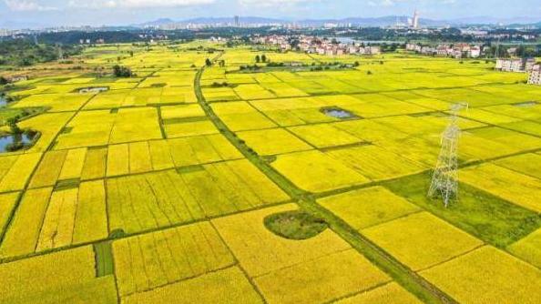 农业农村部从七个方面介绍上半年农业农村经济运行情况