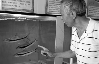 杨君兴团队:青藏高原鱼类活体资源库、遗传资源库建设及研究进展