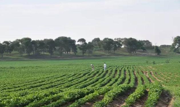 辽宁农产品加工业有序推进产业融合,扎实推进乡村振兴