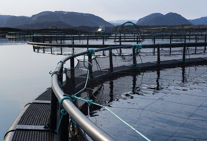 从养殖三文鱼分析人与动物的驯化关系