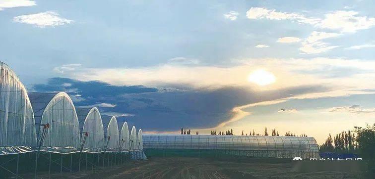 金伯利农场以新发展理念引领农业可持续性发展,带动农民增产增收