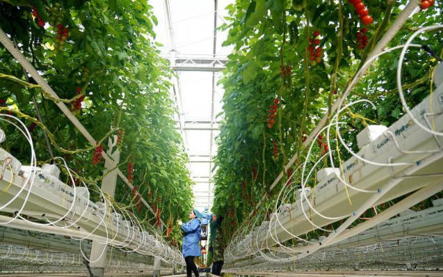 推荐了解大数据改善农业运营的五种方式