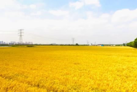 北斗导航稻麦全程精准化生产技术在无锡小麦生产基地示范推广,效果显著