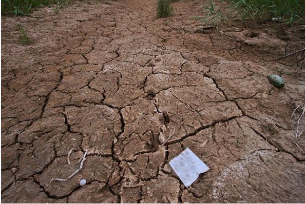 土壤重金属污染的危害及土壤重金属检测技术的研究
