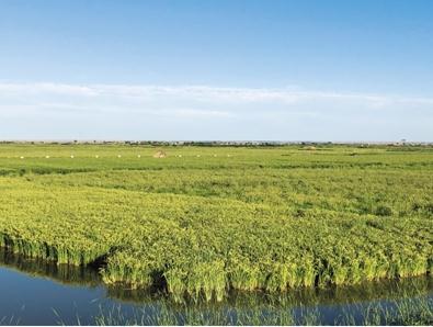 宁夏大学农学院副教授王彬:让盐碱地长出千斤稻