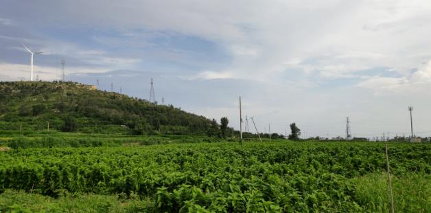 老湖镇多措并举引外资,积极推动中草药产业发展进程
