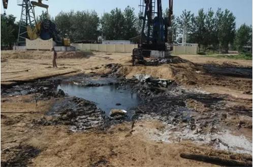 土壤修复技术:石油污染土壤的植物与微生物修复技术
