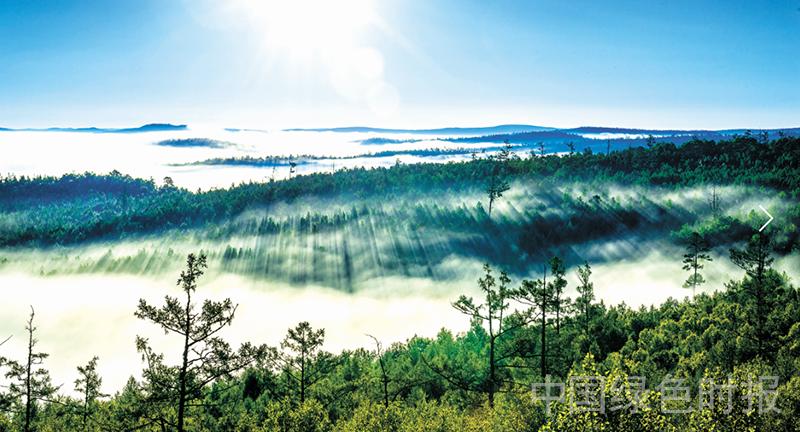 全面落实《天然林保护修复制度方案》,保护天然林决心坚如磐石