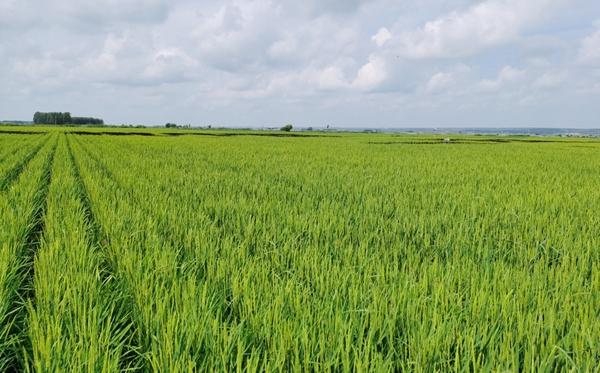 """黑龙江农业筑牢粮食安全""""压舱石"""",加快推动农业现代化步伐"""