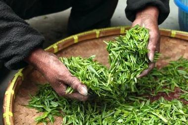 """茶叶品牌""""十四五""""发展环境及建议"""