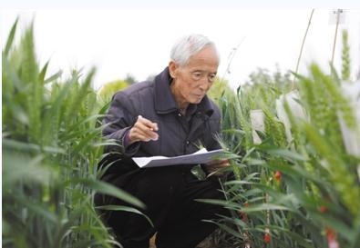 """陕西杨凌农业高新技术产业示范区——一座以""""农""""为特色的农科新城"""