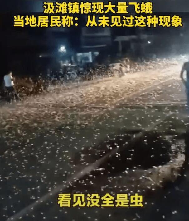 河南邓州罕见蜉蝣大爆发,生物专家解读原因