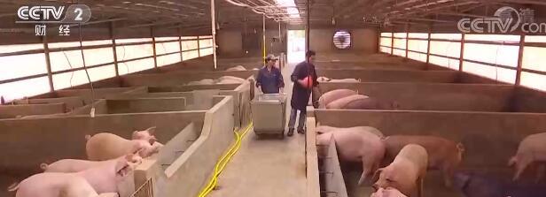 生猪价格出现明显反弹,国家启动2021年度中央储备猪肉收储工作