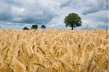 国家现代农业产业园助力现代种业振兴,良种推广加速成果转化