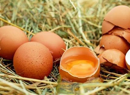 鸡蛋价格上涨原因有哪些?9月鸡蛋价格会持续上涨吗