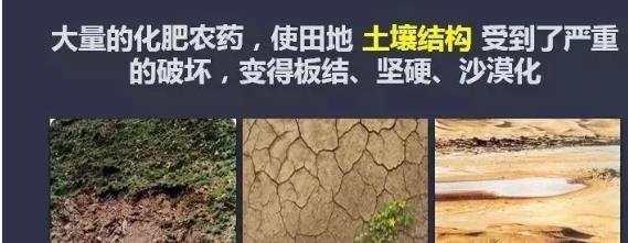 """我国人均每年""""吃化肥""""40斤!化肥施用过量有什么危害?"""