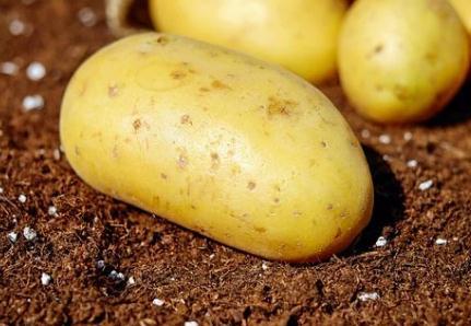 马铃薯地上叶部病害与地下线虫等病虫害防治方案【经验分享】