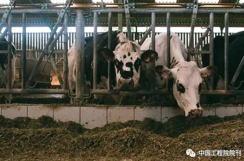 动物营养和饲料科学专题研究